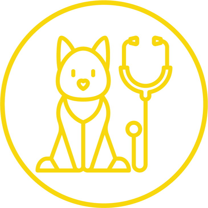 general health exams, veterinarian, Maple Valley WA